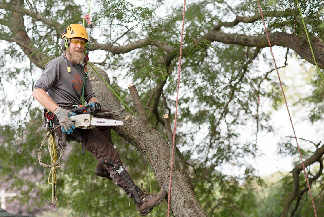 baton rouge tree removal companies