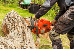 Tree Cutting Experts In Baton Rouge