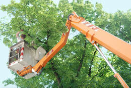 baton rouge a to z tree services near me